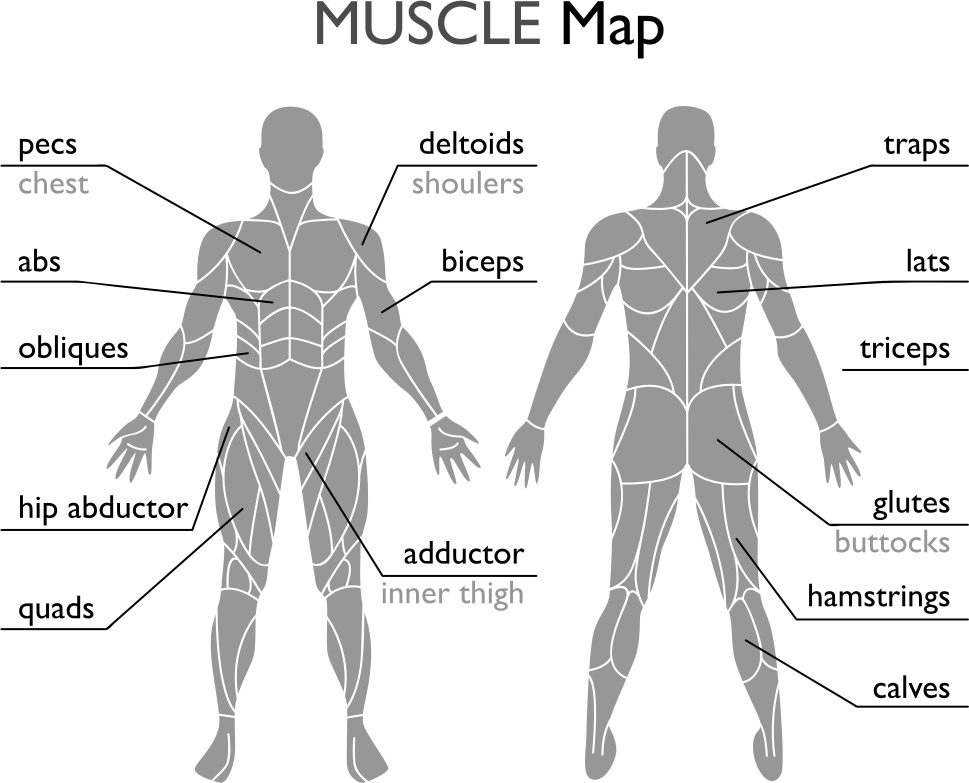 muscle-map